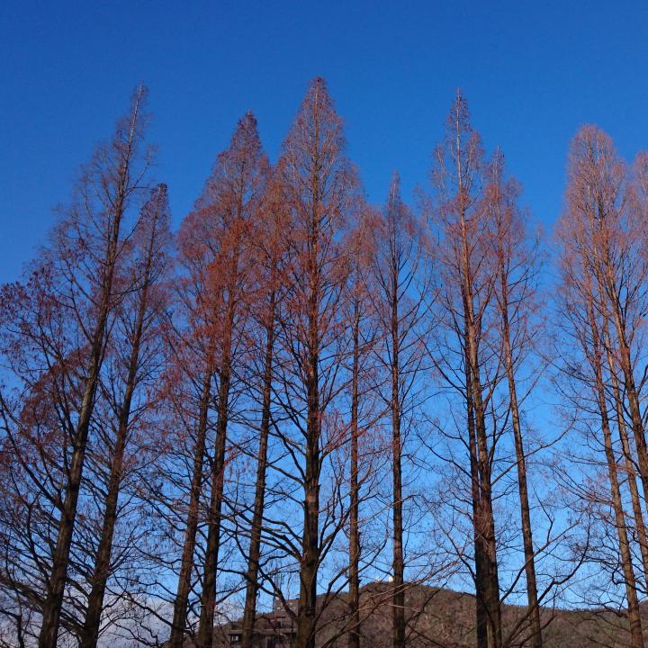切磋琢磨して人は育つ 木も育つ